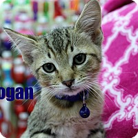 Adopt A Pet :: Logan - Wichita Falls, TX
