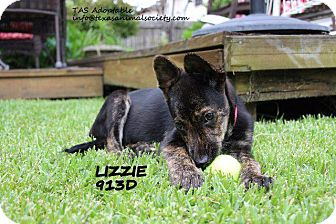 Labrador Retriever/Shar Pei Mix Puppy for adoption in Spring, Texas - Lizzie