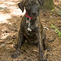Adopt A Pet :: Jewel - Big Canoe, GA