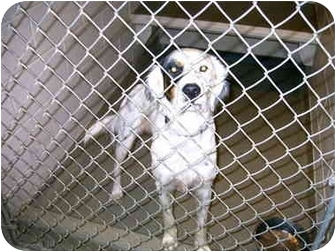 Collie Mix Dog for adoption in Lyman, South Carolina - Tucker(in kill shelter)