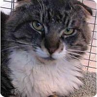 Adopt A Pet :: Loch Lomand - Davis, CA