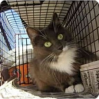 Adopt A Pet :: Smokey - Los Angeles, CA