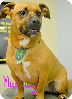 Dachshund/Terrier (Unknown Type, Small) Mix Dog for adoption in Beaumont, Texas - Judy