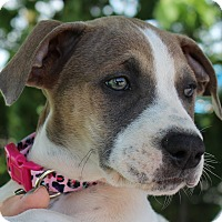 Adopt A Pet :: Trinity - Mount Juliet, TN