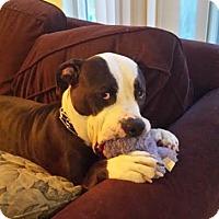 Adopt A Pet :: Magical Molly - Issaquah, WA