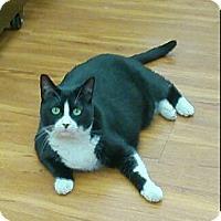 Adopt A Pet :: Memphis - Hamilton, ON