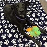 Adopt A Pet :: Lady - Richmond, VA