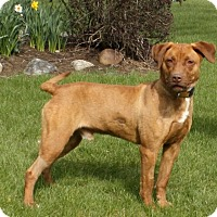 Adopt A Pet :: Avalanche - Lewisville, IN