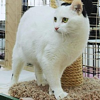 Adopt A Pet :: Cayton - Sunderland, ON