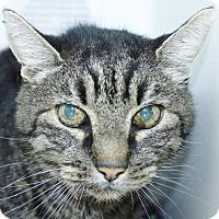 Adopt A Pet :: Buster - Grass Valley, CA