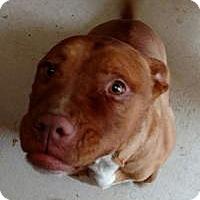 Adopt A Pet :: Peaches - Bakersville, NC