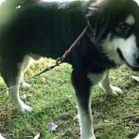 Adopt A Pet :: Hunter 9 months - Augusta County, VA