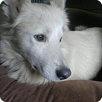 Adopt A Pet :: Eskimo - Brooklyn Center, MN