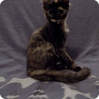Adopt A Pet :: Swablu - Sterling Heights, MI