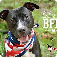 Adopt A Pet :: Porter - Negaunee, MI