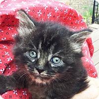 Adopt A Pet :: ADOPTED Fabulous Jazzy Jasmine - Columbus, OH