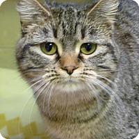 Adopt A Pet :: Lucky - Duluth, MN