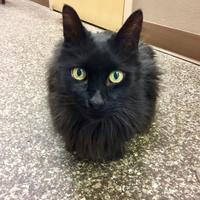 Adopt A Pet :: Jackie - Redmond, OR