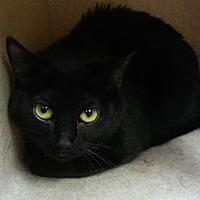Adopt A Pet :: Coco - Reno, NV