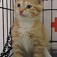 Adopt A Pet :: Macaulay - Massapequa, NY