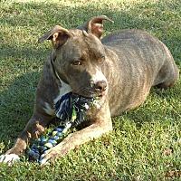 Adopt A Pet :: Sam - Braintree, MA
