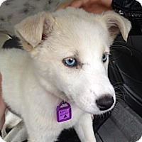 Adopt A Pet :: Elsa - Saskatoon, SK