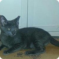Adopt A Pet :: Ross - Raritan, NJ
