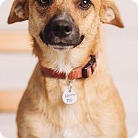 Adopt A Pet :: Bonita - Portland, OR