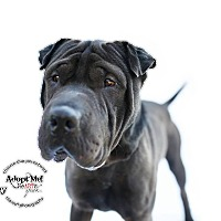 Adopt A Pet :: Kenny - pending - Apple Valley, CA