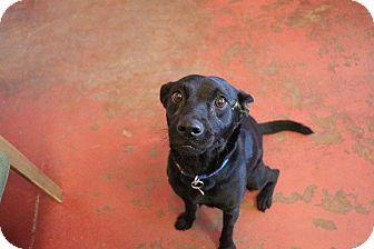 Labrador Retriever Mix Dog for adoption in New Orleans, Louisiana - Cinderella