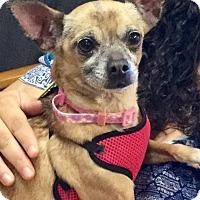 Adopt A Pet :: Mamacita - Phoenix, AZ