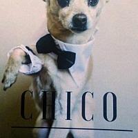 Adopt A Pet :: Chico - Ceres, VA