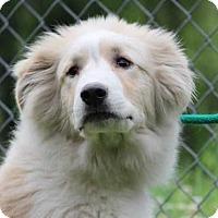 Adopt A Pet :: Zeus (Needs Foster/Has Application) - Washington, DC
