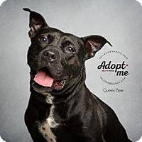 Adopt A Pet :: Queenie - Jackson, NJ