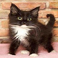 Adopt A Pet :: SALLY - Alameda, CA