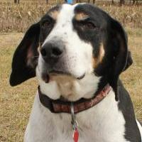 Adopt A Pet :: Guernsey - Oxford, WI