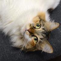 Adopt A Pet :: Karma - Sedona, AZ