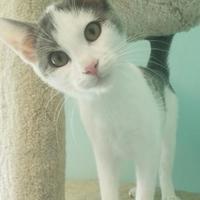 Adopt A Pet :: Crunchy - Seneca, PA