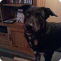 Adopt A Pet :: REMY - Brooksville, FL