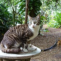 Adopt A Pet :: Beaker - Naples, FL