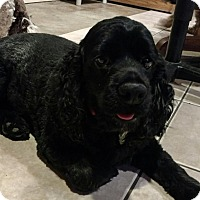 Adopt A Pet :: Molly - Sugarland, TX