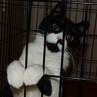 Adopt A Pet :: Wally - Stafford, VA