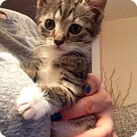 Adopt A Pet :: Piper - River Edge, NJ