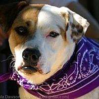 Adopt A Pet :: Holly - Atlanta, GA
