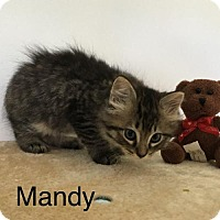 Adopt A Pet :: Mandy - Naugatuck, CT