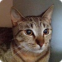 Adopt A Pet :: Simeon - Sarasota, FL