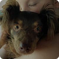 Adopt A Pet :: Buddy - Decatur, GA