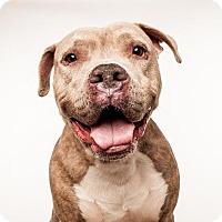 Adopt A Pet :: Astro - Seattle, WA