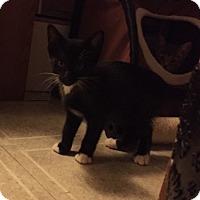 Adopt A Pet :: Tux - Caro, MI