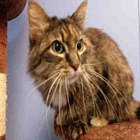 Adopt A Pet :: PIPA - Canfield, OH